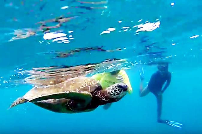 North Shore Turtle Beach Snorkeling Tour on Oahu