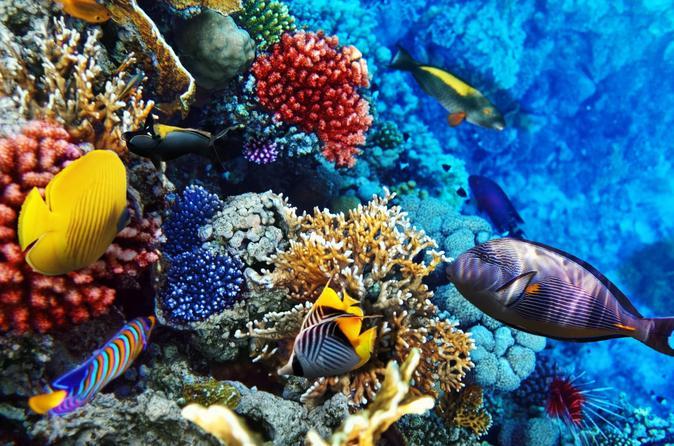 Oahu Certified Scuba Diving Tour on Oahu