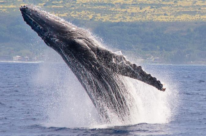Whale Watching Catamaran Sail on Oahu